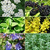 Cold & Flu Season Herb Garden Seed Collection - A 6 Variety Pack of Medicinal Herb Seeds in FROZEN SEED CAPSULES - The Very Best in Long-Term Seed Storage - Plant Seeds Now or Save Seeds for Years