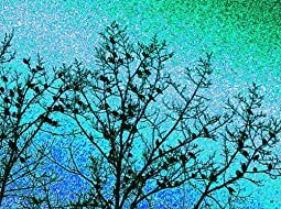 Starlings by Will Borden