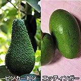 国華園 果樹苗 濃厚アボカドセット 2種2株