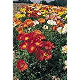 POPPY RED DOUBLE FLOWER SEEDS BY KRAFT SEEDS [PACK OF 5]