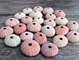 Sea Urchin |25 Pink Sea Urchin Shell |25 Pink Sea Urchin Shells for Craft and Decor | Nautical Crush Trading TM