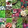 20 Packs of Vegetable Seed - Carrot, Lettuce, Tomato etc