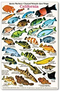 California and baja fish identification card for California fishing guide