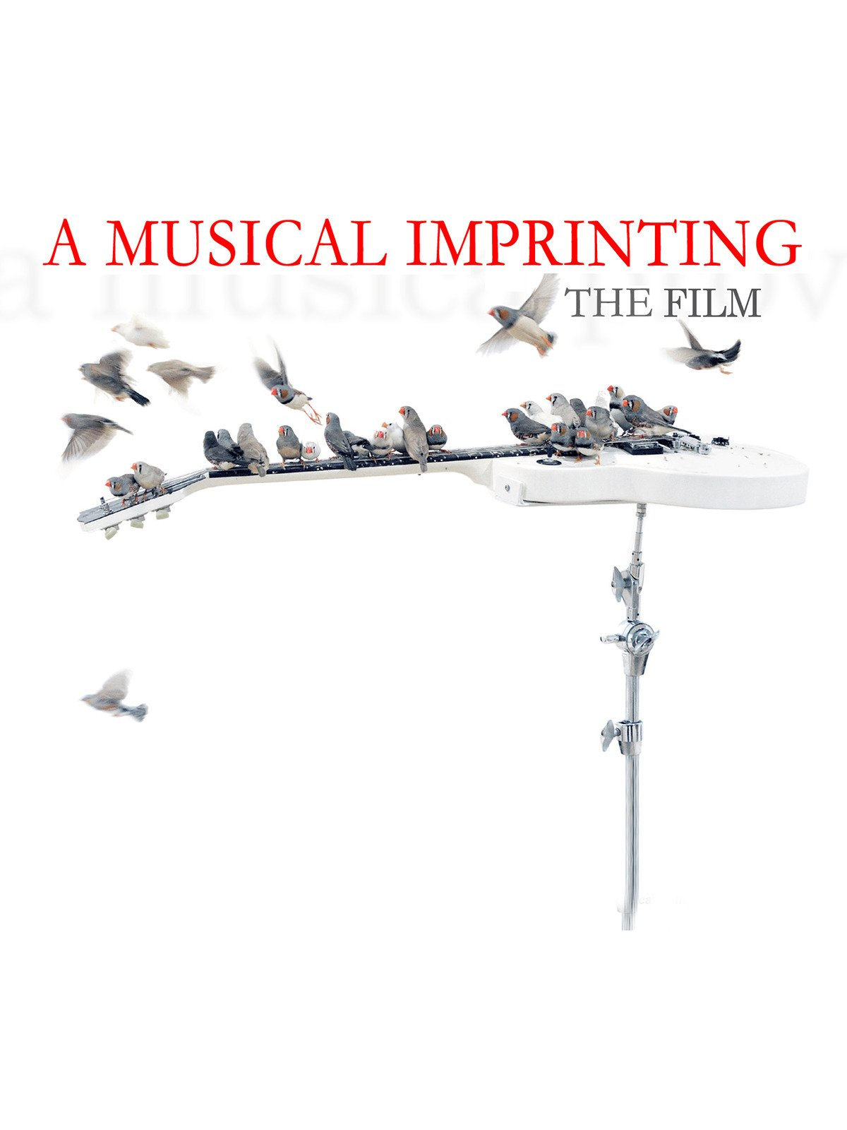 A Musical Imprinting