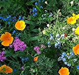 Search : Partial Shade Wildflowers - 25 Varieties and Annual and Perennial Flowering Plants