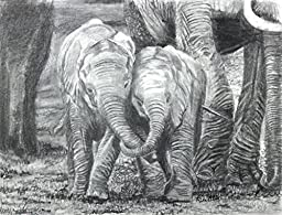 Best Friends, Baby Elephants, Archival Print of Pencil Drawing, 10 X 13 Inches