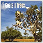 Goats in Trees 2016 Square 12x12 (Mul...