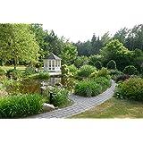 Riwo Gartenpavillon Pavillon - 165 Elegance geschlossen 8-Eck 3,5m