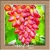 Best-Selling100 PCS/Pack 12 Kinds Of Grape Seeds Advanced Fruit Seed Natural Growth Grape Sweet Kyoho Gardening...