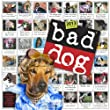 Bad Dog� Wall Calendar 2013