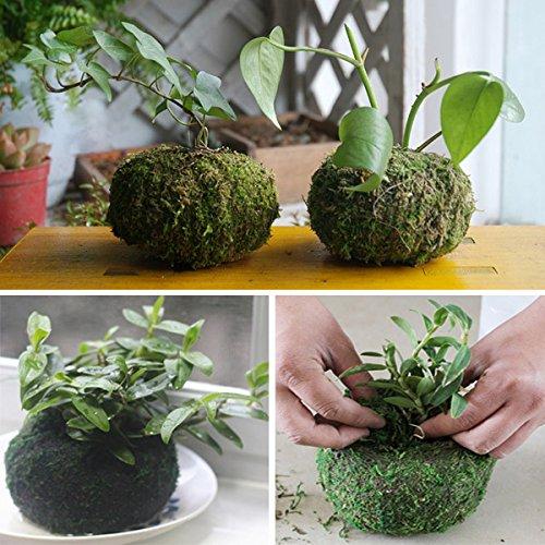 bluelover-culture-hors-sol-de-11cm-mousse-sechee-plantation-plante-de-jardin-boule-en-pot-hydratante