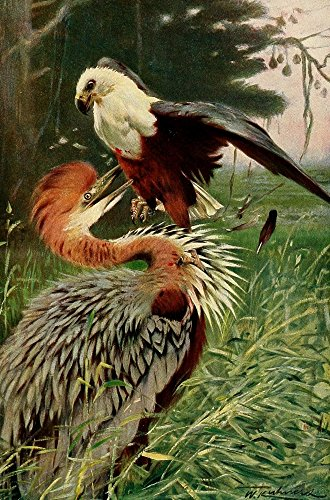 fw-kuhnert-wild-life-of-the-world-1916-giant-heron-sea-eagle-kunstdruck-6096-x-9144-cm