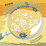 img - for From Mealworm to Beetle: Following the Life Cycle (Amazing Science: Life Cycles) book / textbook / text book