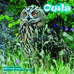 Owls Calendar - 2015 Wall calendars -...