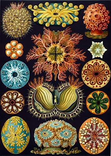 Artifact-Puzzles-Haeckel-Sea-Squirts-Wooden-Jigsaw-Puzzle