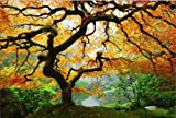 Maple Tree Mind Blowing Canvas Wall Art - Two Gifts, Keyholder Leaf and 5 Stars, Startonight Nature 31.5 X 47.2 In