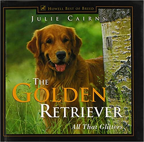 The Golden Retriever All That R Ann Johnson Golden Retriever