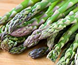 10 Asparagus Roots Jersey Supreme - MALE DOMINATE - TASTY