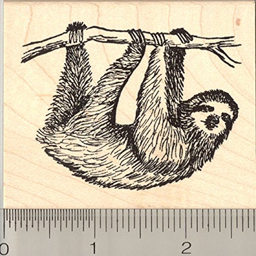 Sloth Rubber Stamp, Arboreal Three Toed Species of South and Central America