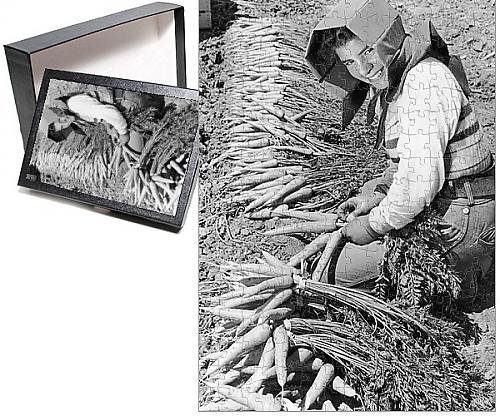 Photo-Jigsaw-Puzzle-of-Carrot-Harvest-California-farm-worker-wearing-a-special-hat