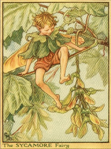 Green Frog Art Wall Decor, The Sycamore Fairy