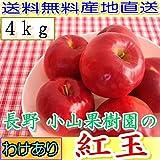 訳あり 農園より産地直送 長野産 減農薬・有機肥料 栽培樹上完熟紅玉 ご家庭用 約4kg小玉16~30個入 完熟 リンゴ りんご わけあり品