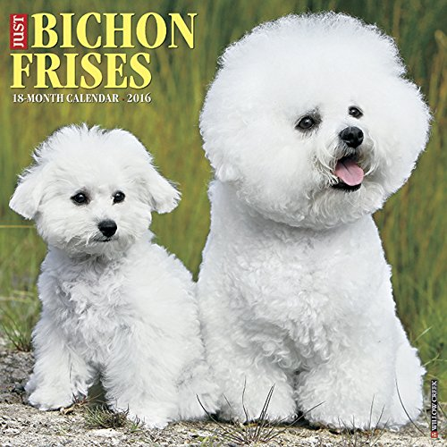2016 Just Bichons Frises Wall Calendar