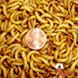 5000ct Live Mealworms Live Pet Food & Bait