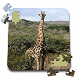 Angelique Cajam Safari Giraffes - South African Giraffe head to legs - 10x10 Inch Puzzle (pzl_20117_2)