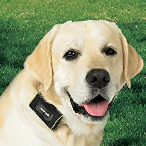Zoombak ZMBK100 Advanced GPS Dog Locator