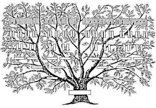 arbre-genealogique-7-generations