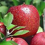 【今だけ20%オフ!】日本一の評価!江刺産りんご サンふじ 5kg(14~16玉)お歳暮にも大好評 ランキングお取り寄せ