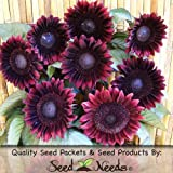 Package of 25 Seeds, Procut Red Sunflower (Helianthus annuus) Non-GMO Seeds by Seed Needs