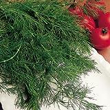 SUTTONS SEEDS: Herbs: Dill Seeds (725 seeds)