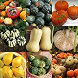 Winter Squash Mix 15 seeds