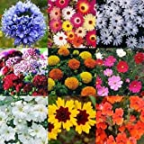 Cornflower, Iceplant, Demorphoteca, Sweet William, Marigold Mix, Cosmos, Gypsophila, Rudbeckia, Nemesia Great collection of winter flower seeds by Seedscare India (9pkts/avg 50+ seeds)