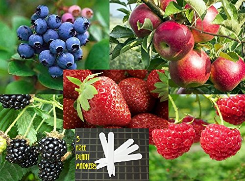 fruit-combo-pack-raspberry-blackberry-blueberry-strawberry-apple-organic-525-seeds-647923989472-self