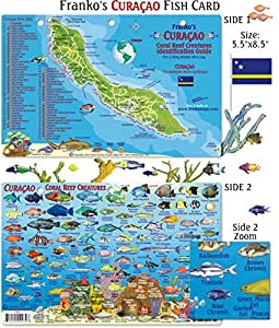 Curacao Reef Creatures Fish ID for Scuba Divers and Snorkelers