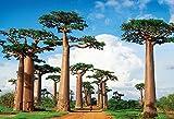 300ピース ジグソーパズル めざせ!パズルの達人 世界の絶景 バオバブの並木道-マダガスカル(26x38cm)