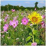 Mélange de fleurs abeilles et polinisateurs - Bee Attraction 2 grammes