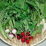 ミニ野菜 生食サラダ おまかせセット
