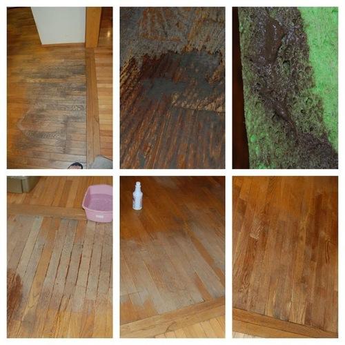 Amazon.com - Pro Shot Industrial Re-Newing Floor Restorer ...