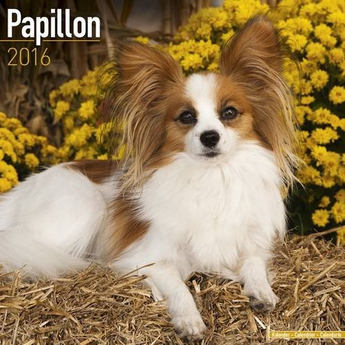 Papillon Calendar - Only Dog Breed Papillon Calendar - 2016 Wall calendars - Dog Calendars - Monthly Wall Calendar by Avonside