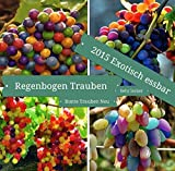 15x Regenbogen Trauben Bunt Samen Hingucker Pflanze Rarität Obst