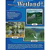 Wetland Chart