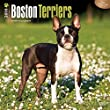 Boston Terriers 2016 Wall Calendar