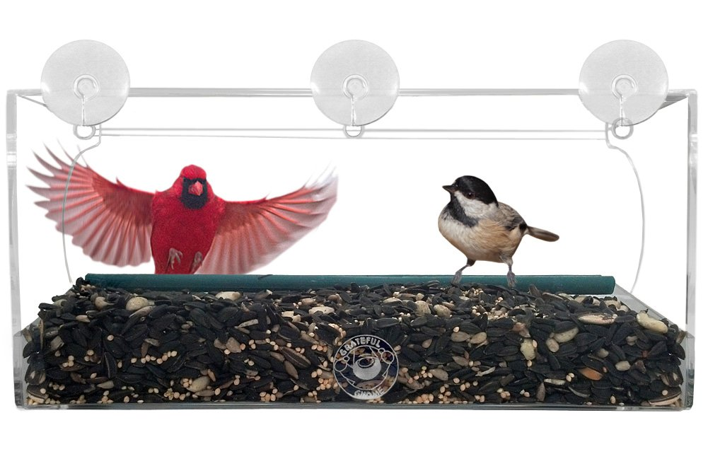 Amazon.com : Grateful Gnome - Long Window Bird Feeder For Small ...
