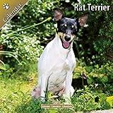 Rat Terrier 2011 Wall Calendar #30435-11