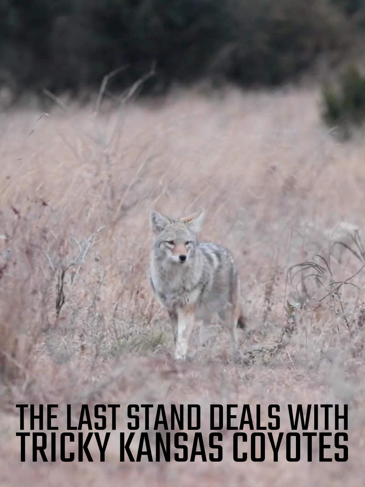 The Last Stand Season Deals With Tricky Kansas Coyotes