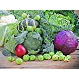 RED CABBAGE, BRUSSELS, LETTUCE, CABBAGE SAVOY, CAULIFLOWER, ONION, BROCCOLI SEEDS COMBO SOLD BY SUPER AGRI GREEN...